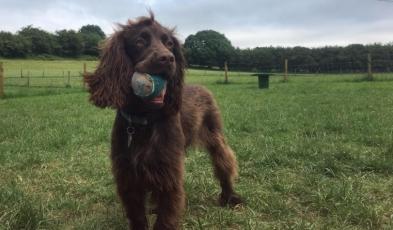 Ralph & his ball
