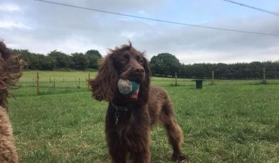 Ralph & his ball!